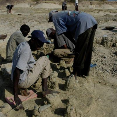 Searching for Human Origins