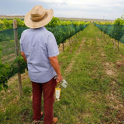 Armenia - Wine
